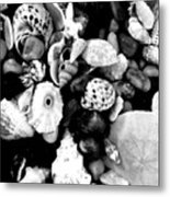 Black And White Seashells Metal Print