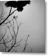 Black Buzzard 6 Metal Print