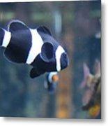 Black Clown Fish Metal Print