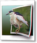 Black Crowned Night Heron - Use Red-cyan 3d Glasses Metal Print