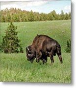 Black Hills Bull Bison Metal Print