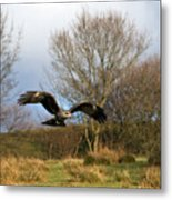 Black Kite Metal Print