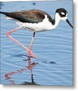 Black-necked Stilt Wading  Metal Print