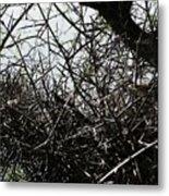 Black Walnut Spikes II Metal Print