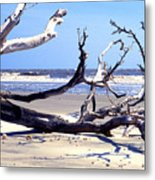 Blackbeard Island Beach Metal Print by Thomas R Fletcher