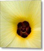 Blooming Okra Flower Metal Print