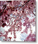 Blossom Artwork Spring Flowers Art Prints Giclee Metal Print