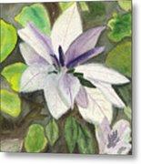 Blossom At Sundy House Metal Print