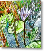Blossom Lotus Flower In Pond Metal Print