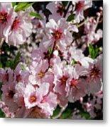 Blossoming Almond Branch Metal Print
