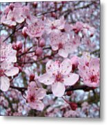 Blossoms Art Prints Nature Pink Tree Blossoms Baslee Troutman Metal Print