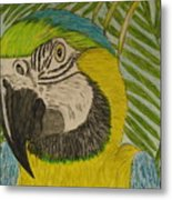 Blue And Gold Macaw Parrot Metal Print