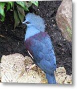 Blue Bird Washington D.c. National Aviary Metal Print