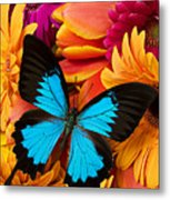 Blue Butterfly On Brightly Colored Flowers Metal Print by Garry Gay