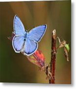 Blue Butterfly On Leaf Metal Print