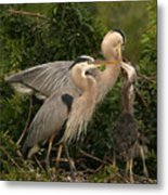 Blue Heron Family Metal Print