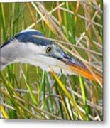 Blue Heron Hunting Metal Print