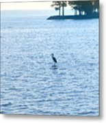 Blue Heron On The Chesapeake Metal Print