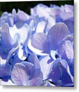 Blue Hydrangea Flowers Art Prints Baslee Troutman Metal Print