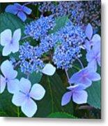 Blue Hydrangea Flowers Floral Art Baslee Troutman Metal Print
