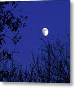 Blue Moon Among The Tree Tops Metal Print