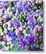 Blue Purple Hydrangea Flower Macro Art Metal Print