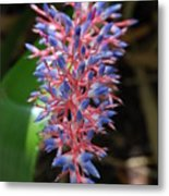 Blue Red Plant Metal Print