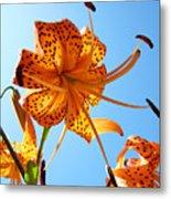 Blue Sky Tiger Lily Floral Garden Art Prints Baslee Troutman Metal Print