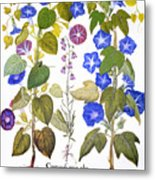 Bluebell And Morning Glory Metal Print