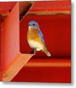 Bluebird On Red Metal Print