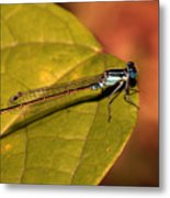 Bluetail At Sunset Metal Print