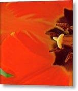 Bold Tulip Metal Print