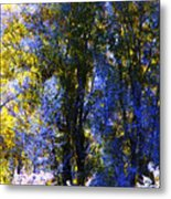 Bosque Glow And Chantilly Snow Metal Print