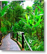 Botanic Gardens Trail Metal Print