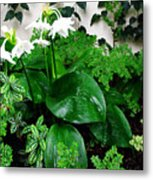 Botanical Garden With White Flowers Metal Print