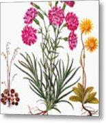 Botany: Flowers, 1613 Metal Print