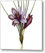 Botany: Saffron Metal Print by Granger