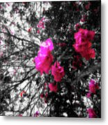 Bougainvillea Invasion Metal Print