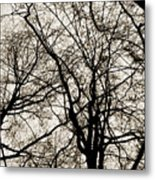Branches Intertwined Metal Print