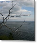 Branching Out Metal Print