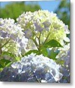 Bright Floral Art Pastel Blue Purple Hydrangeas Flowers Baslee Troutman Metal Print