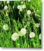 Bright Grass 2 Pd2 Metal Print