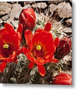 Bright Orange Cactus Blossoms Metal Print