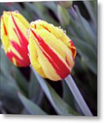 Bright Yellow And Red Tulips Metal Print