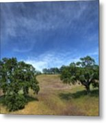 Broccoli Trees Metal Print