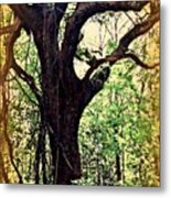 Broken Branch Metal Print