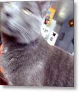 Brooklyn Cat Metal Print