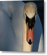 Brooklyn Swan Metal Print