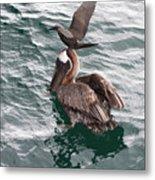 Brown Noddy Atop Pelican Scouts Dinner Metal Print