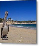 Brown Pelican At The Baja Metal Print